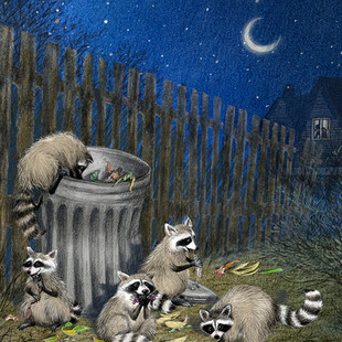 "Illustration to accompany poem, ""Racoon Rascals"" by June Steube"