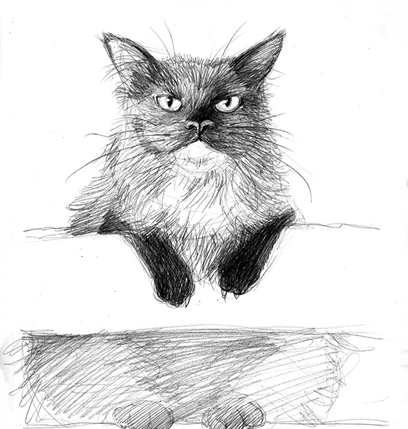 'What's it to you?' cat sketch