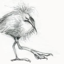 Black Egret sketch