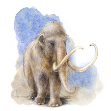 Woolly Mammoth: Colour study for The Canadian Museum of Nature, 2019