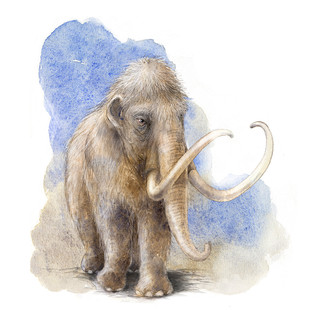 Woolly Mammoth: front view, The Canadian Museum of Nature