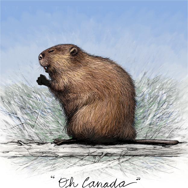 Oh Canada! Beaver