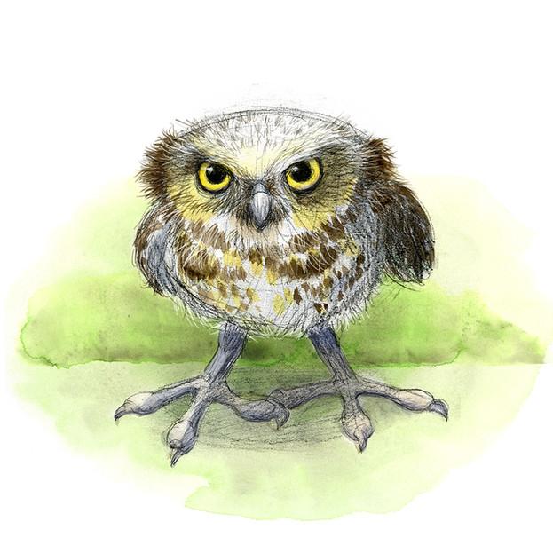 annoyed owl June Steube