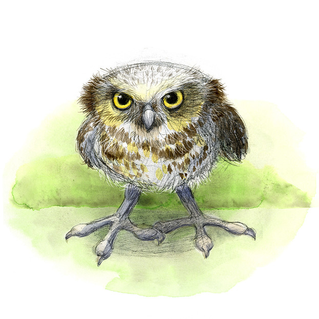 Watercolour study of a Burrowing owl