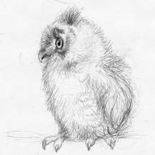 owl chick sketch