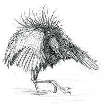 Black Egret - umbrella pose sketch