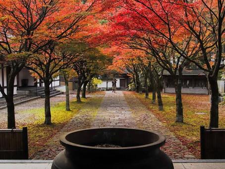 紅葉の季節ですね!