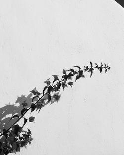 Santorini3_8x10