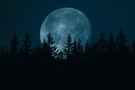 moon for website.jpg