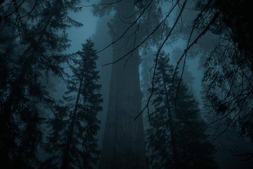 trees for portfolio.jpg