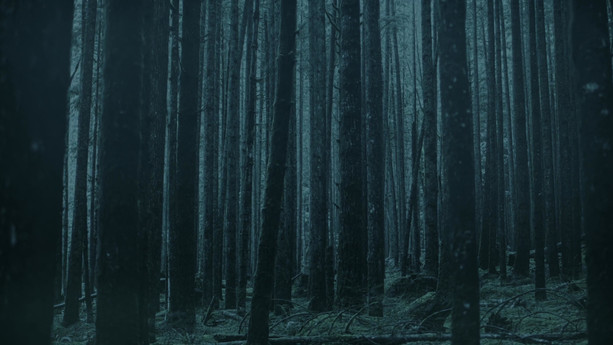 thewoods_2.mp4
