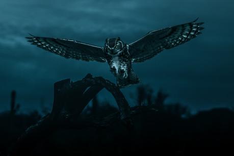 AZ owl.jpg
