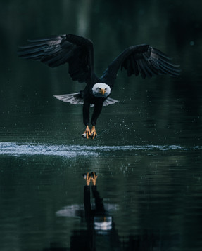 Eagle Fish.jpg
