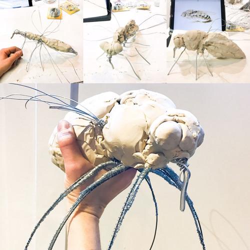 Rodent-Size-Fly development
