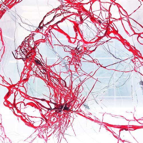 Vascular System of Normal Human Female B