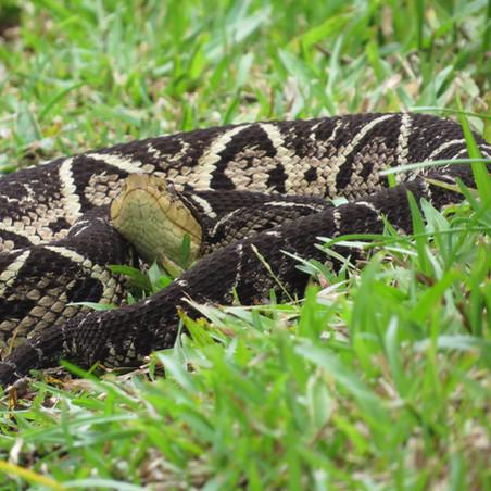 O perigo das serpentes nas trilhas