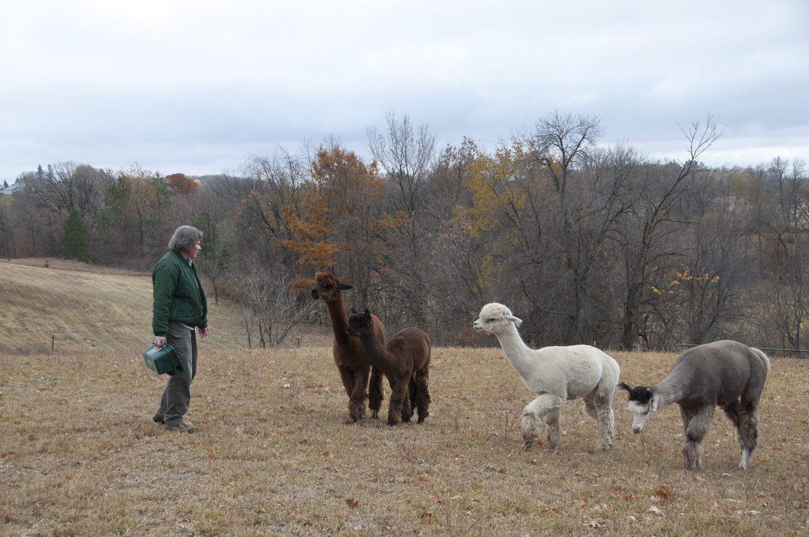 Alpacas-Screen_Resolution-©2011-Colby_Abazs-www.colorlightphotography.com-0729