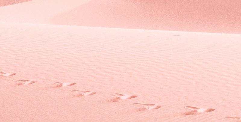 Pink Sands Wax Melt