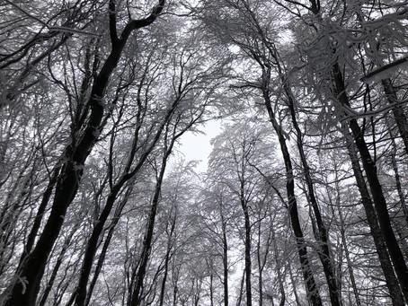 A téli égbolt alatt