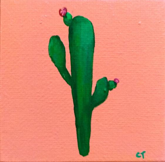 Tiny Cactus 2