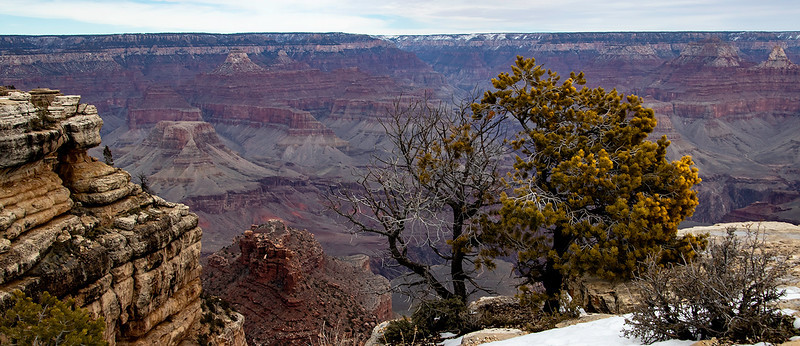 front page Grand Canyon panoramic.jpg
