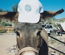 Donkey%20w_logo%20hat%20(1)_edited.jpg