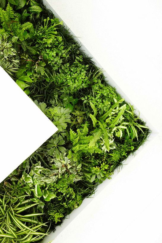 green design.jpg