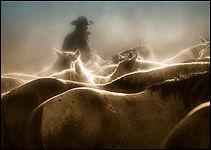 equine photograpy, Misty Morn.jpg