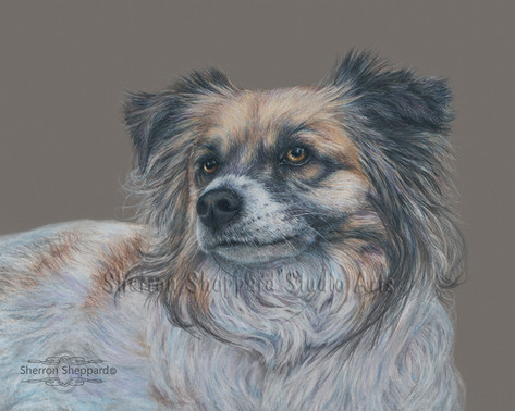 "Colored pencil drawing of ""Munchie"""