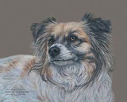 colored pencil drawing, pet portrait, dog portrait, dog painting, animal portrait, dog portrait