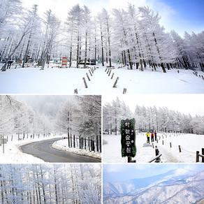 ชมทัศนียภาพน้ำค้างแข็งปกคลุมทั่วภูเขาดอกกยูซาน