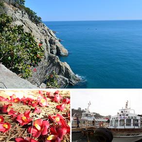 เดินตามทางที่รายล้อมไปด้วยดอกคาเมลเลียสีแดง (Walk on the Flowery Path: Jisimdo Island, Geoje-si)