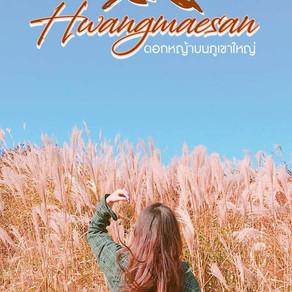 ชมภูเขาดอกหญ้าที่ฮวางแมซาน (Hwangmaesan)