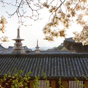 ประวัติศาสตร์หนึ่งพันปีในหนึ่งค่ำคืนที่เมืองเคียงจู