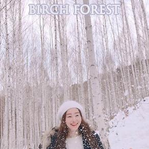 เที่ยวป่าฤดูหนาวยามหิมะโปรยปรายในป่าต้นเบิร์ชที่ Inje Wondae-ri