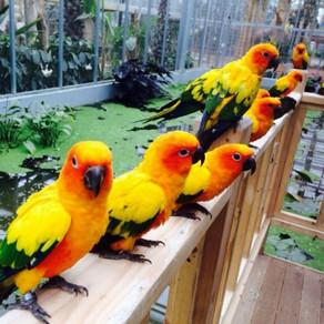 สวนนกคยองจู (Gyeongju Bird Park (경주 버드파크))