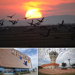 ตื่นตาไปกับนกกว่า 200 สายพันธุ์ ที่อ่าวชอนซูมัน เมืองซอซัน