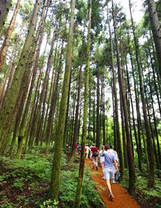 【 Photo: Trekking trail at Geomun Oreum 】