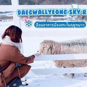 เที่ยวฟาร์มแกะในฤดูหนาวที่แทกวานรยองฮานึลมกจัง : Daegwallyeong Sky Ranch