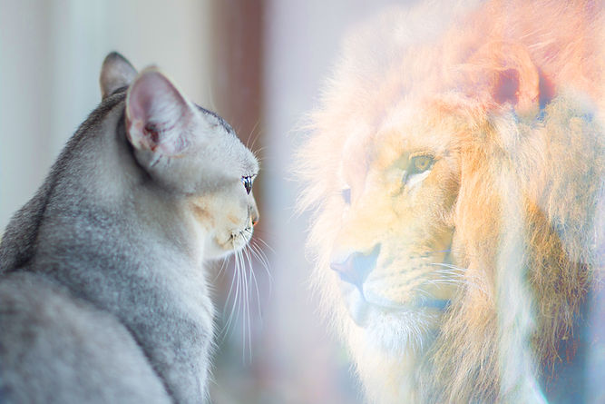 Cat looking at mirror and sees itself as