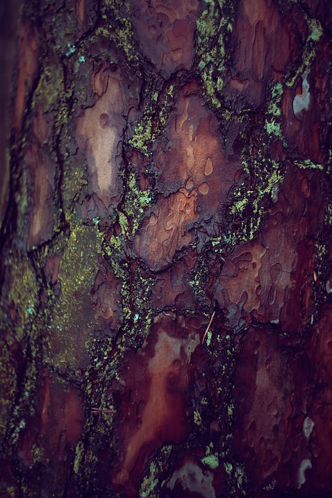 mossy bark image.jpg