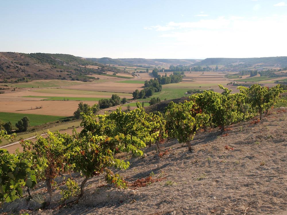 Valle del Esgueva desde la Cuesta Roa