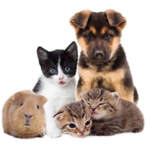 Pet Health Test