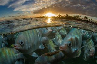 Peixinhos em Porto de Galinhas