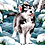 Thumbnail: Husky Puppy in the Snow - 3/5 Complexity