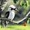 Thumbnail: Australian Kookaburra Bird - 4.5/5 Complexity