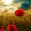 Thumbnail: Poppy Field - 2/5 Complexity