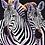 Thumbnail: Zebra Couple - 1.5/5 Complexity