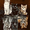 Thumbnail: Kittens and Wild Cat Reflection - 3.5/5 Complexity