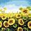 Thumbnail: Sunflower Field - 3.5/5 Complexity